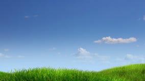 Fond de pré et de ciel illustration libre de droits