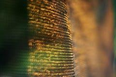 Fond de réseau dans le coucher du soleil Photographie stock