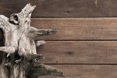 Fond de racine et de texture ou en bois Images stock