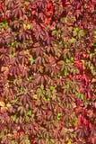 Fond de raisin décoratif Photographie stock libre de droits