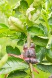 Fond de reproduction végétale photo stock