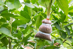 Fond de reproduction végétale photographie stock