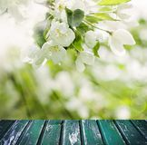 Fond de ressort avec des fleurs, feuilles Photo libre de droits