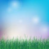 Fond de ressort avec l'herbe verte Photo libre de droits