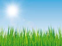 Fond de ressort avec la texture d'herbe, le ciel bleu et le soleil Photographie stock
