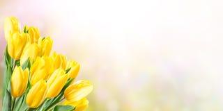 Fond de ressort avec la tulipe jaune Images libres de droits