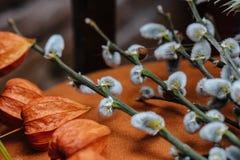 Fond de ressort avec le beau chat-saule de printemps avec le Ca Image libre de droits