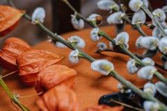 Fond de ressort avec le beau chat-saule de printemps avec le Ca Photos stock