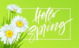Fond de ressort avec les marguerites et l'herbe verte fraîche Bonjour lettrage d'écriture de ressort Illustration de vecteur illustration de vecteur