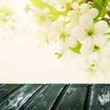 Fond de ressort de fleur avec les fleurs blanches d'Apple Image stock