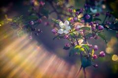 Fond de ressort de la floraison et du soleil images stock