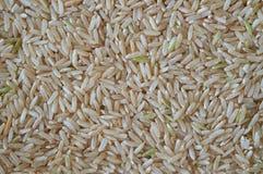 Fond de riz Image libre de droits