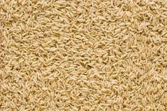 Fond de riz brun Photographie stock libre de droits