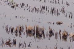 Fond de riz brun en Thaïlande. images libres de droits