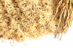 Fond de riz de Gaba, riz brun germé, propertie médicinal Images stock