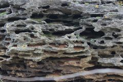 Fond de roche de coquille de mer photographie stock