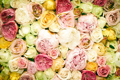 Fond de Rose Photos libres de droits