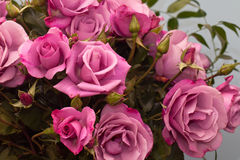 Fond de Rose Photographie stock libre de droits