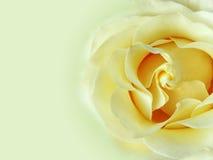 Fond de Rose Image libre de droits