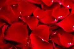 Fond de Rose Petals rouge fraîche image stock