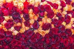 Fond de roses Photos libres de droits