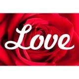 Fond de roses d'amour Photographie stock libre de droits