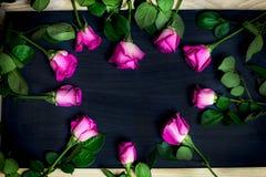 Fond de roses de jour de femme Images libres de droits