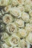 Fond de roses jaunes, modifié la tonalité image stock