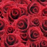 Fond de roses rouges Photographie stock libre de droits