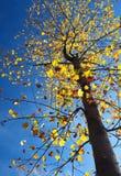 Fond de saison d'automne Photo libre de droits