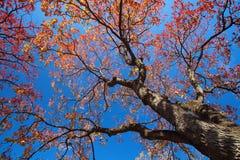 Fond de saison d'automne Images stock