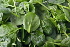 Fond de salade de feuille de valériane Images libres de droits