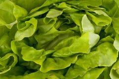 Fond de salade verte Photographie stock libre de droits