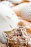 Fond de Seashell photos stock