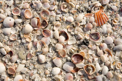 Fond de Seashell Image stock