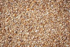 Fond de Seashell photographie stock