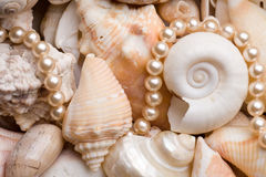 Fond de Seashell photos libres de droits