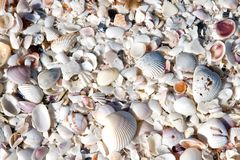 Fond de Seashell images stock