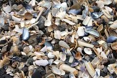Fond de Seashells Photos libres de droits
