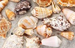 Fond de Seashells photo libre de droits