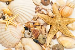 Fond de Seashells Photographie stock libre de droits