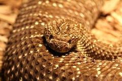Fond de serpent à sonnettes Images libres de droits