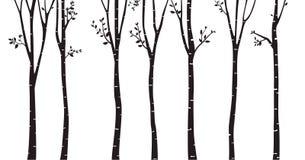 Fond de silhouette d'arbre de bouleau Photo stock