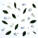 Fond de source avec des fleurs photographie stock libre de droits