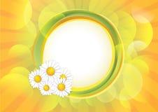 Fond de source avec des fleurs de camomille Photographie stock libre de droits