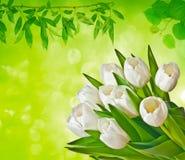 Fond de source avec des tulipes Photographie stock
