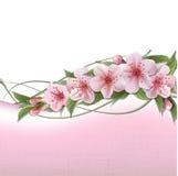 Fond de source avec les fleurs roses de cerise Image stock