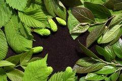 Fond de source avec les lames vertes Feuilles vertes de jeunes sur le fond brun Place pour le texte Pour la conception Plan rappr Image libre de droits