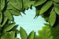 Fond de source avec les lames vertes Feuilles vertes de jeunes sur un fond de turquoise Place pour le texte Pour la conception Pl Photographie stock libre de droits