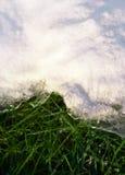 Fond de source. Fermez-vous vers le haut de l'herbe sous la neige Image libre de droits